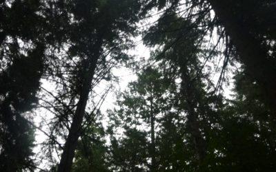 Cuando los árboles no te dejan ver el bosque…..